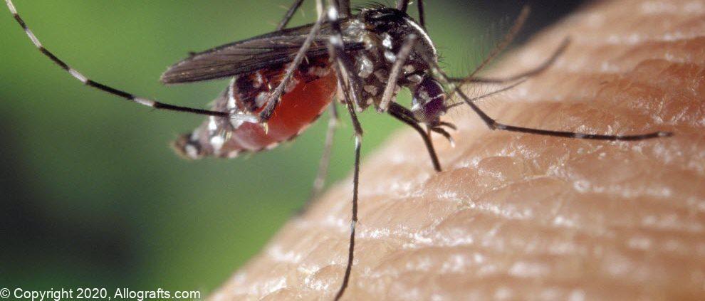 mosquito-1332382